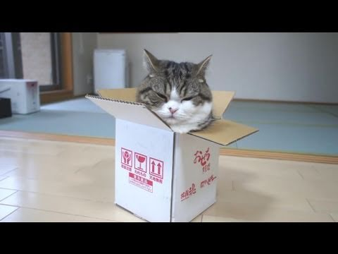 box with cat's head sticking out